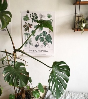 white, plant and poster