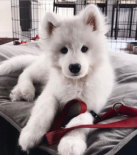 cute, dog and animals