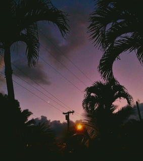 art, palm trees and nature