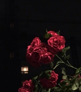 red roses, flowers and black background