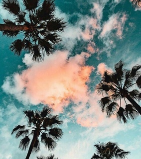 pinterest, palm trees and nature