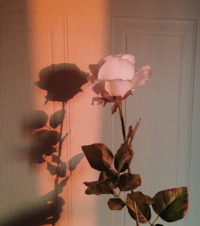 white, sunset and rose