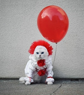 cat, cute and it movie