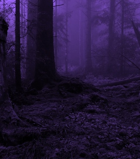 purple, forest and goth