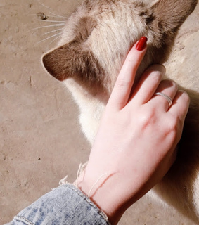 sun, cat and red nails
