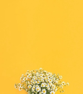 daisy, yellow and wallpaper