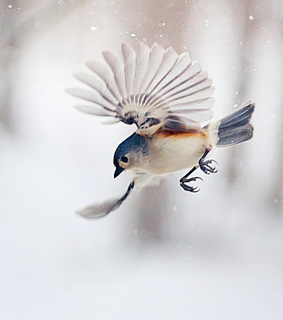 snow, wings and Flying