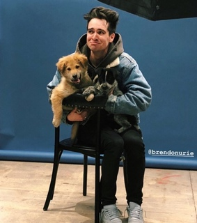 cute, brendon urie and panic at the disco