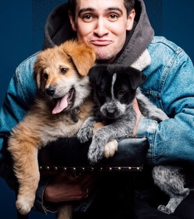 puppies, pray for the wicked and brendon urie