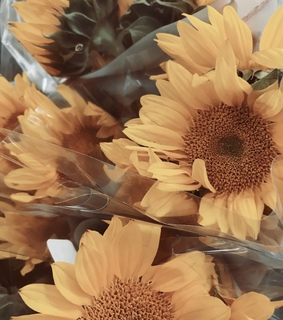tumblr, sunflower and love