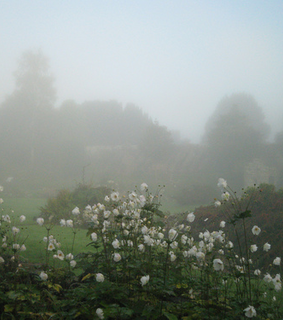 tumblr, mist and meadow
