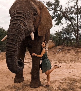 love, elephant and nature