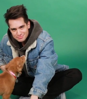 brendon urie, panic! at the disco and beebo