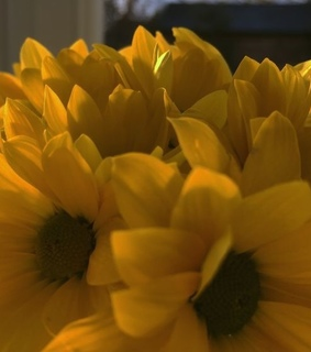 flower, aesthetic and yellow