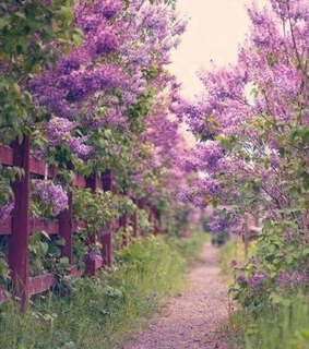 lilac, countryside and may
