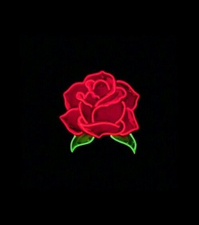 rose, light and backgrounds
