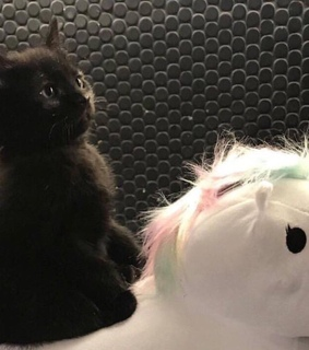 little, unicorn and plushy