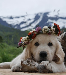 puppy, dogs and spring