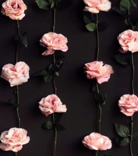 wallpaper, roses and pink roses