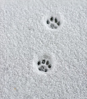winter, wallpaper and paw