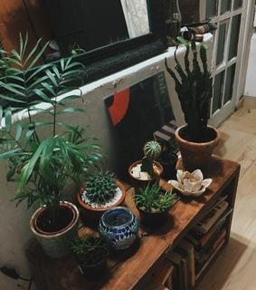 plant, decor and Pink Floyd