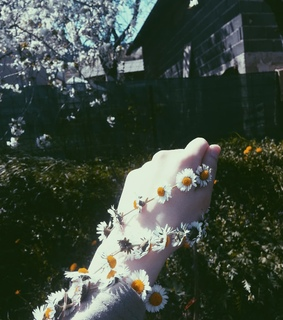 arm, spring and sun