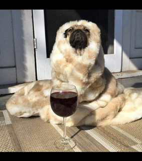 puppies, wine and relatable