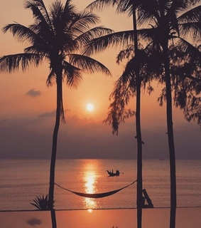 palm trees, view and beautiful