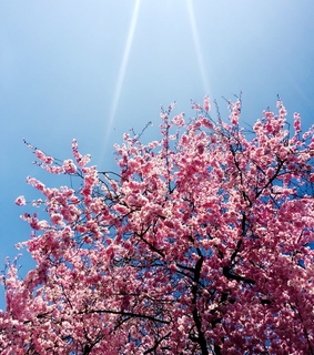 sunny day, sky and spring