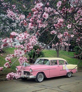 white, flowers and cars