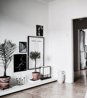 plants, indague and home
