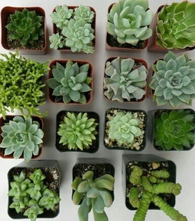 plants, aesthetic and succulent