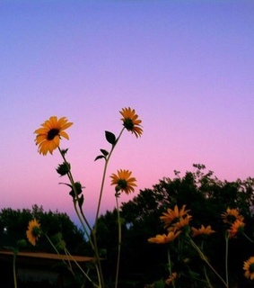 tumblr, flowers and sky
