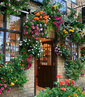 flowers, flower and window