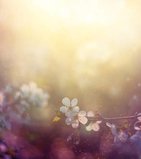 flowers and spring