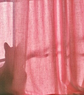 curtain, pink and grunge