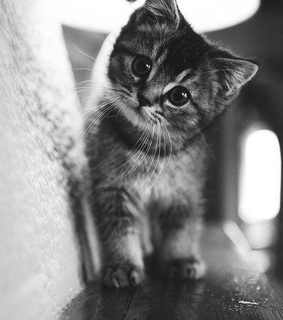 photography, black and white and cat