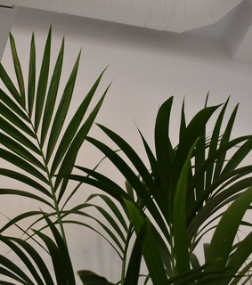 white, aesthetic and plant