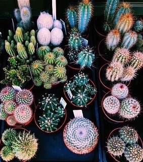 cactus, fatty and thorns