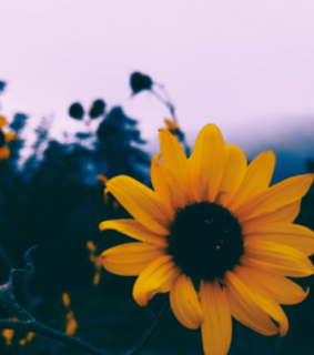 yellow, nature and tumblr