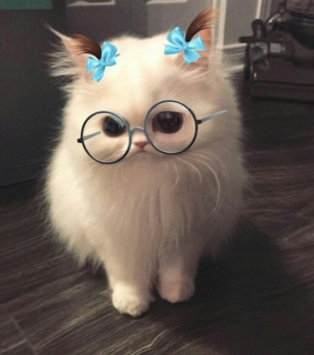 glasses, kawaii and cute