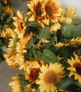 sunflowers, yellow and summer