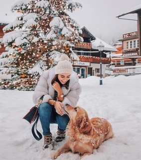 cold, dog and winter