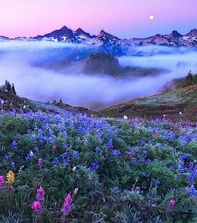flowers, foggy and sunset