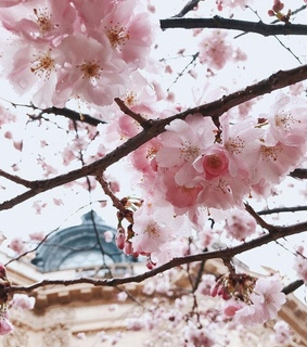 flowers, photo and cherry blossom