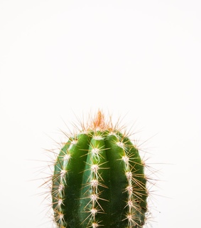 cactus, flower and simple
