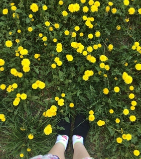 walk, inspiration and spring