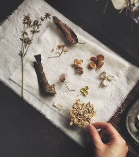 botanical, tumblr and wicca