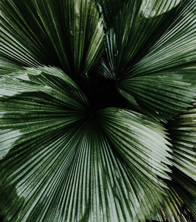 green, dark green and tropical