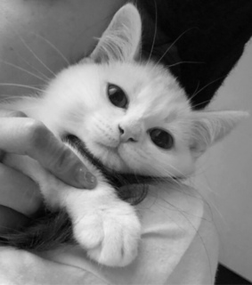 cute, black and white and white